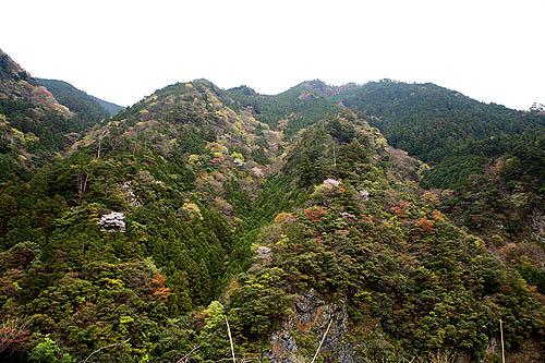 上北山村の山