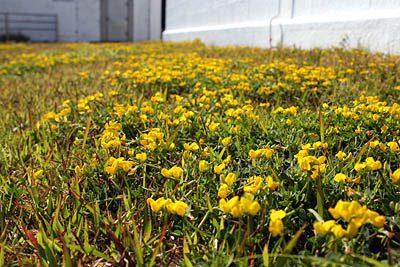 灯台の下の花畑