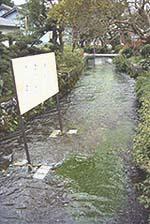地蔵川と梅花藻
